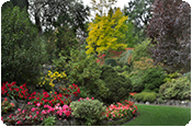 Domestic and Private Garden Maintenance